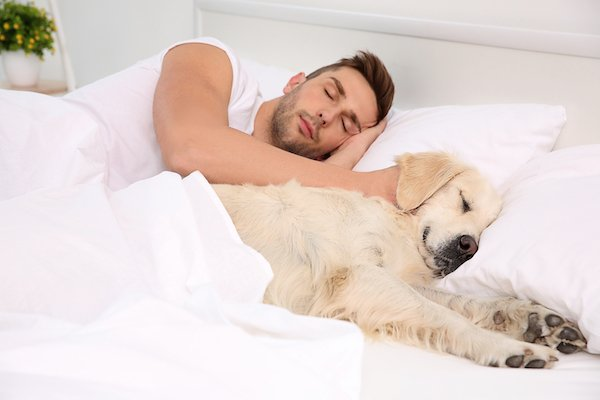 which is the best mattress in India